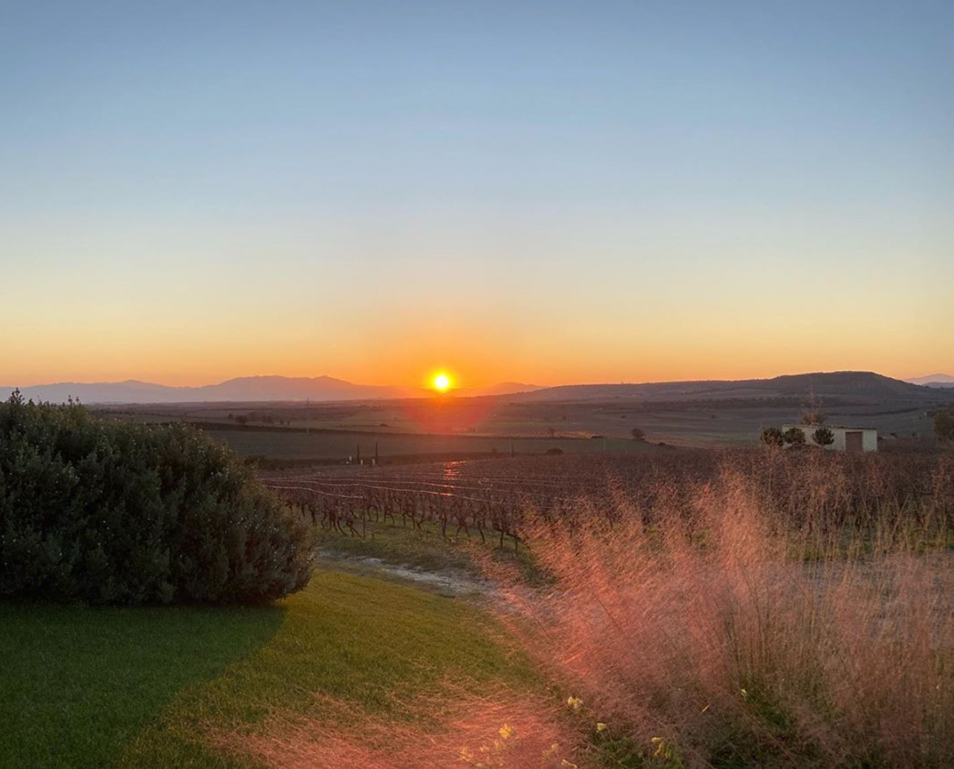 vista vigneti tramonto aperitivo