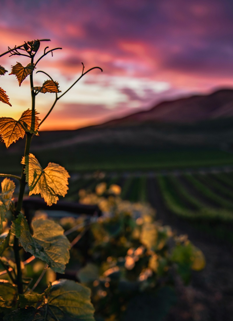 tramonto Audarya vigne degustazione